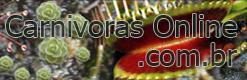 Carnívoras Online
